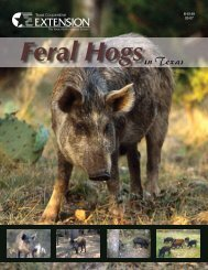 Feral Hogs in Texas - Trinity Waters