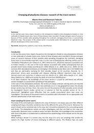 Emerging phytoplasma diseases - IPWG - International ...