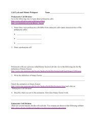Cell Cycle and Mitosis Webquest