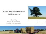 Biomass potentials in a global and danish perspective - Bioenergi