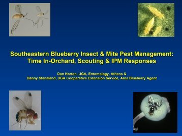 Southeastern Blueberry Insect & Mite Pest Management: Time In ...