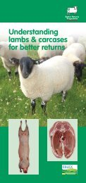 Understanding lambs and carcases - Eblex