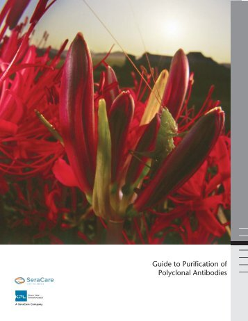 Guide to Purification of Polyclonal Antibodies - KPL