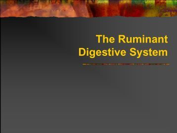The Ruminant Digestive System