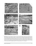 Preliminary description of the lithofacies and structure of the Schist ... - Page 7