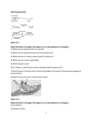 Anatomy & Physiology 1 FINAL EXAM
