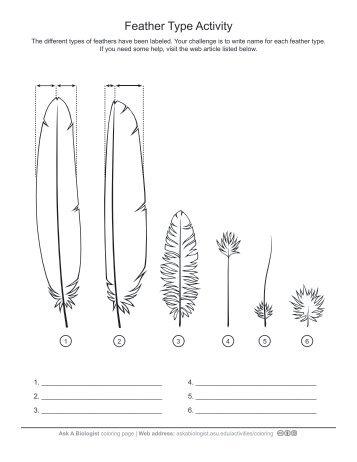 Alphabet Sounds Worksheet Ear Cellular Respiration Worksheet Middle School Pdf with Parts Of A Plants Worksheet Pdf Feather Type  Anatomy Worksheet  Ask A Biologist Worksheet For Grade 5