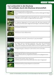 Gut vorbereitet in die Diashow - OroVerde – Die Tropenwaldstiftung ...