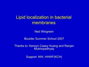 Lipid localization in bacterial membranes