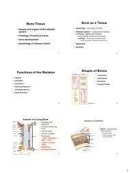 Cha. 7 Bone Tissue