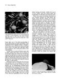 A Fascination with Dogwoods - Arnoldia - Page 3