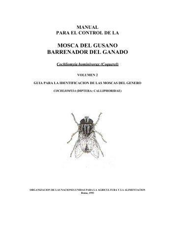 mosca del gusano barrenador del ganado - Oficina Regional de la ...