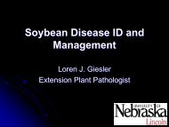 Soybean Disease ID and Management