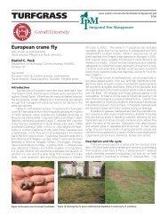 European crane fly - New York Invasive Species Information