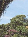 resultados - Reserva da Biosfera da Mata Atlântica - Page 2