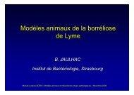 Modèles animaux de la borréliose de Lyme