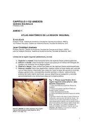 Anexo al Cap I-132 Atlas anatómico de la región inguinal - sacd.org.ar