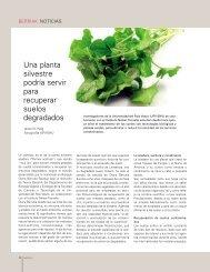 Una planta silvestre podría servir para recuperar suelos degradados