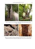 Protected Insects of Latvia – Lasius fuliginosus (LATREILLE, 1798 ... - Page 7