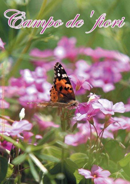 foto M.Topini - Campo de'fiori