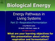 Biological Energy 2