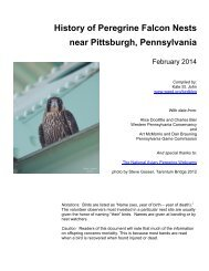 History of Peregrine Falcon nests in the Pittsburgh area - WQED