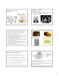 Golgi & Lysosomes, Sept. 27, 2007