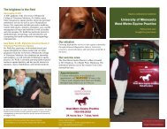 new brochure! - University of Minnesota College of Veterinary ...