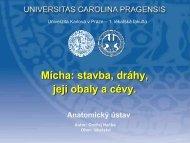 Tr. vestibulo – spinalis - Anatomický ústav 1.LF UK - Univerzita Karlova