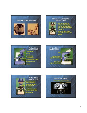 Using the Microscope Rules for Using the Microscope Rules for ...