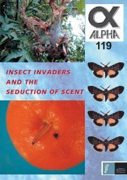 Learning Task 3 - Insect Invaders - English Online