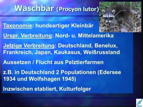 Lebewesen mit Migrationshintergrund - LTVT