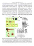 Syndecan-1 regulates BMP signaling and dorso-ventral patterning ... - Page 4