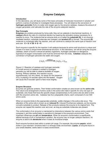 APLabEnzymeCatalysis - Rowland High School