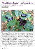 Utgave nr 3 - Den norske Rhododendronforening - Page 4