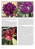 Utgave nr 3 - Den norske Rhododendronforening - Page 6
