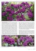 Utgave nr 3 - Den norske Rhododendronforening - Page 7