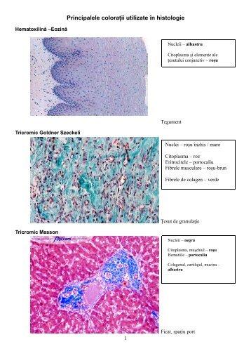 Principalele coloraţii utilizate în histologie