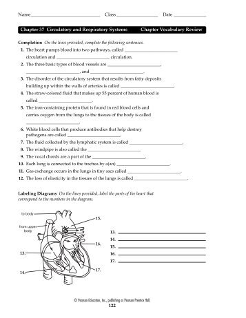 Chapter 37 Circulatory and Respiratory Systems Chapter ... - vanellism