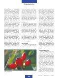 Pflanzliche Nahrungsergänzungsmittel für Patienten mit Arthrose - Page 2