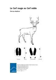 Le Cerf rouge ou Cerf noble - Mountain Wilderness Schweiz