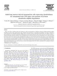 Adult bone marrow-derived mononuclear cells expressing ...