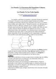 Los Panales; La Estructura Del Organismo Colmena Los Panales ...