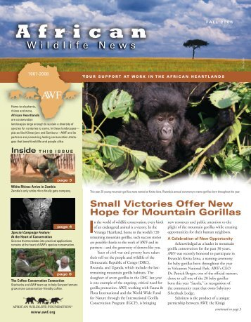 Small Victories Offer New Hope for Mountain Gorillas