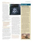 Small Victories Offer New Hope for Mountain Gorillas - Page 3