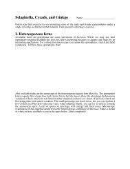 Selaginella, Cycads, and Ginkgo I. Heterosporous ferns