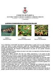 La difesa fitosanitaria dell'ippocastano a Padova - Clamer Informa