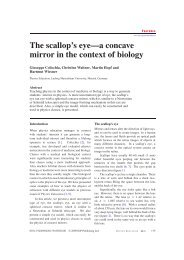 The scallop's eye---a concave mirror in the context ... - Senior Physics