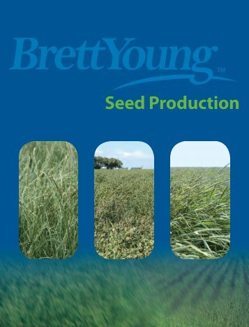 Seed Production - BrettYoung