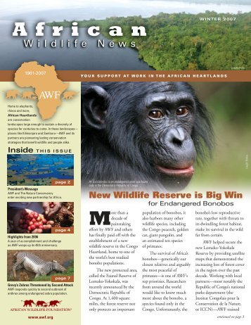 New Wildlife Reserve is Big Win for Endangered Bonobos